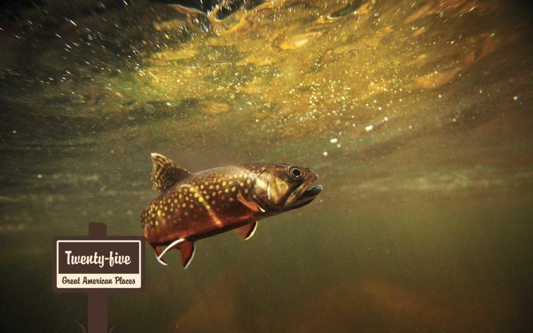 Mashpee National Wildlife Refuge